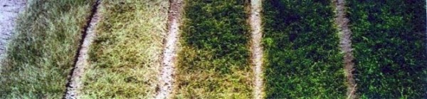 Chart shows images of grass that was